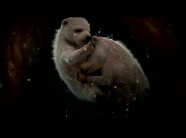 02 - Polar bears