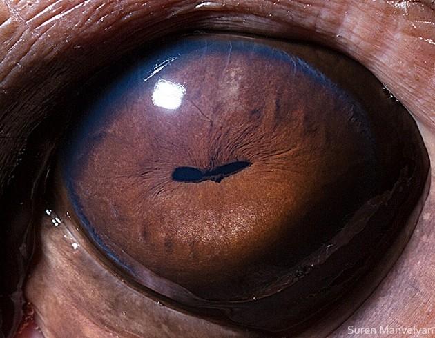 animal-eyes10-934x