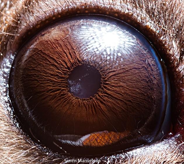 animal-eyes11-934x