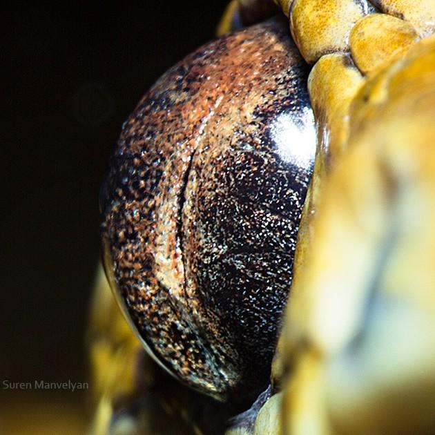 animal-eyes13-934x