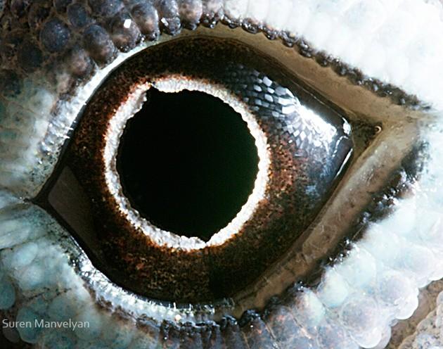 animal-eyes15-934x