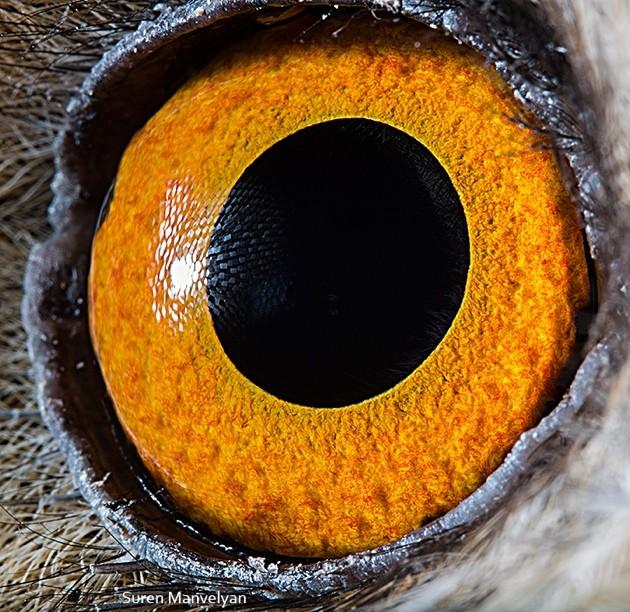 animal-eyes16-934x