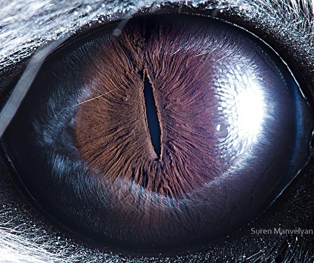 animal-eyes17-934x