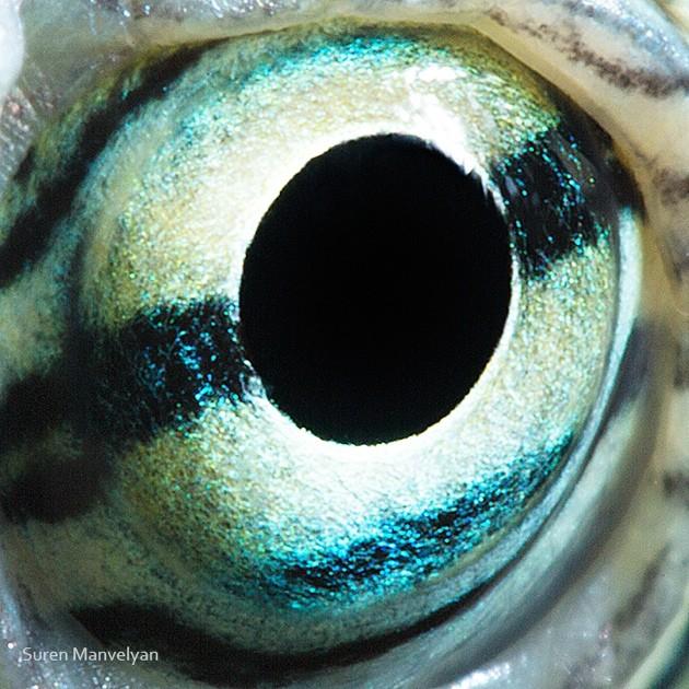 animal-eyes18-934x