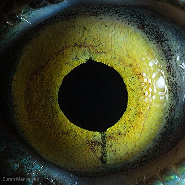 animal-eyes19-934x