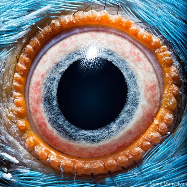 animal-eyes2-934x