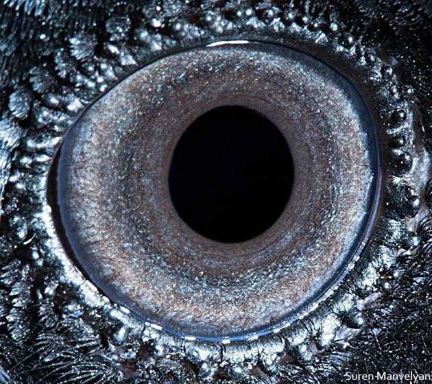 animal-eyes20-934x