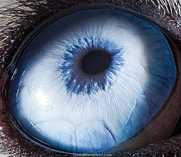 animal-eyes3-934x