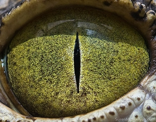 animal-eyes4-934x