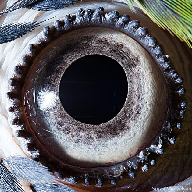 animal-eyes8-934x