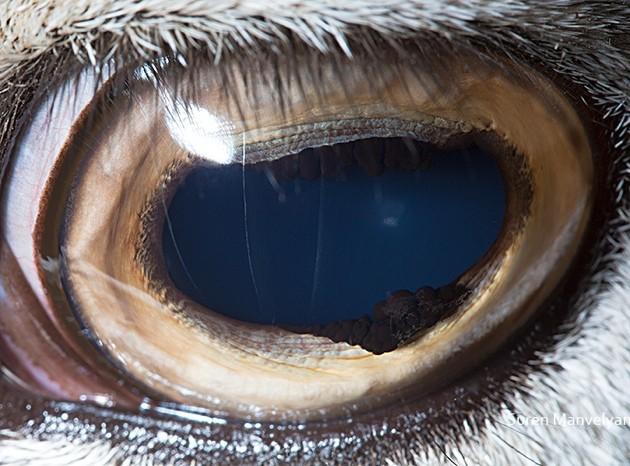 animal-eyes9-934x