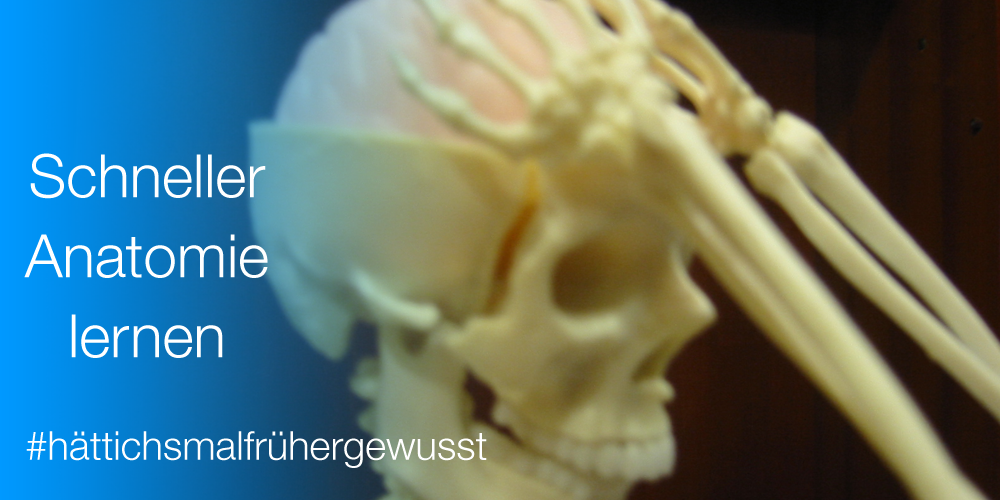 Skelett fasst sich an den Kopf - Anatomie online lernen mit Kenhub.