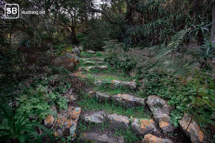 Mit Gras bewachsener Weg aus Steinen führt in einen Wald - Geheimnis kommt ans Licht.
