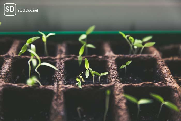 Junge Menschen im Garten - Junge Tomatenpflanzen stehen auf dem Fensterbrett in Aussaatschalen.