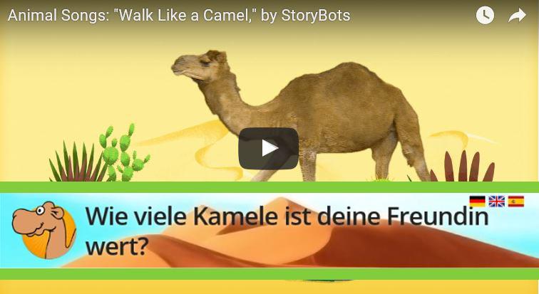 studiblog kamel rechner titelbild