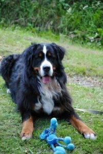 Mein Hund Merlin mit seinem Spielzeug