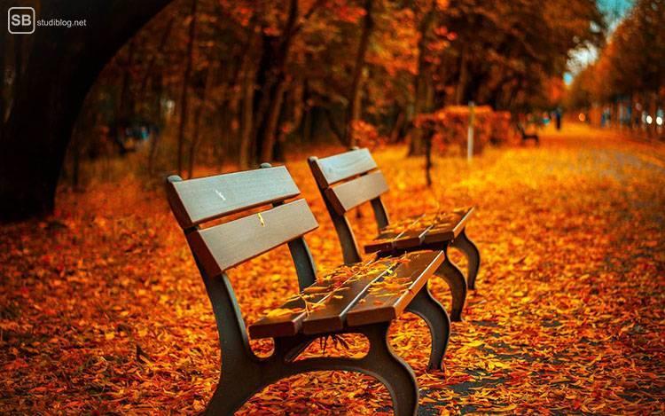 Auslandssemester in Deutschland: Zwei Bänke stehen unter herbstlich orangen Bäumen, die ihre Blätter verlieren
