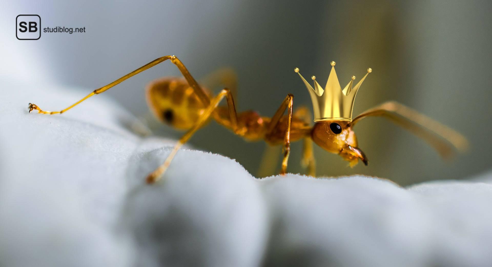 Wenn Prokrastiantion zu weit geht und man sich plötzlich als König der Ameisen wieder findet nur weil ein Keks auf dem Tisch lag