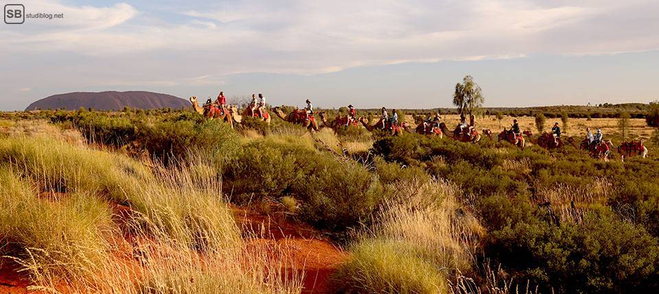 Auslandssemester in Australien: Kamel-Tour beim Ayer Rock