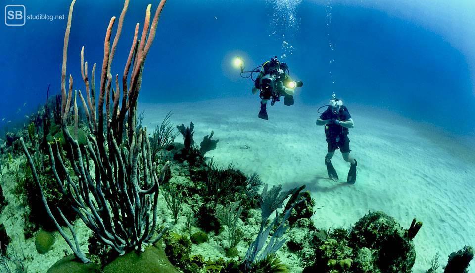Auslandssemester in Australien: Taucher im Great Barrier Reef