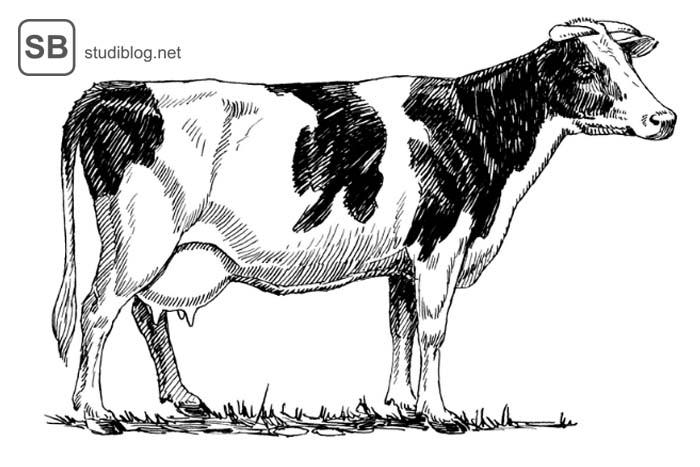 Kühe erklären die Gesellschaftsformen