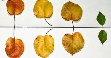 Zwei gleiche Blätter liegen sich gegenüber - Was Professoren bzgl. Prüfungen sagen und eigentlich wirklich meinen.